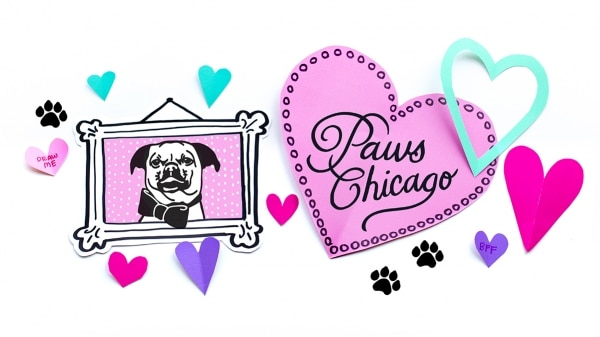 Lindsay chose to donate to PAWS Chicago